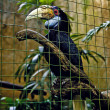 Hornbill in captivity at Bali bird aviary in Indonesia - Stock Photo