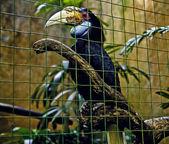 Hornbill in captivity at Bali bird aviary in Indonesia — Stock Photo