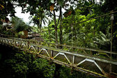 старый подвеска ходить мост через реку — Стоковое фото