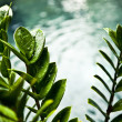 Fresh green leaves on pool edge background — Stock Photo #8992810