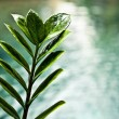 Fresh green leaves on pool edge background — Stock Photo #8992816