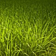 New spring green grass. Background photo. — Stock Photo