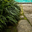 Fresh green leaves on pool edge background — Stock Photo