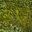 Old stone wall covered vegetation. Photo Background. — Photo