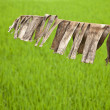 Rice field. — Stock Photo #8995049