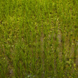 Rice field. — Stock Photo #8995278