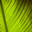 Texture of a green leaf as background. - Foto de Stock  