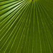 Texture of a green leaf as background. — Stock Photo
