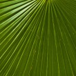 Texture of a green leaf as background. - Lizenzfreies Foto