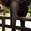 Elephant — Stock Photo #9113808