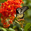 Butterfly feeding on spring flower. - Stock Photo