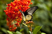 Butterfly feeding on spring flower. — Stock Photo