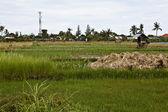水稻 tarrace 在山中。巴厘岛。印度尼西亚 — 图库照片