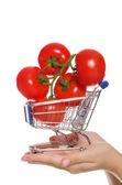 Zweig mit tomaten in einkaufswagen auf palm — Stockfoto