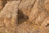 Pacas de heno — Foto de Stock