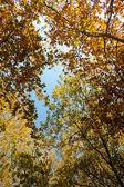 Podzimní listí na stromech — Stock fotografie