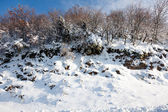 Snowy hillside — Stock Photo