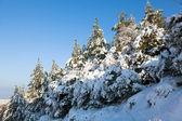 Snowy hillside — Stock Photo