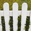 Fence with hedge — Stock Photo