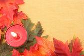 Sfondo di foglia d'autunno — Foto Stock