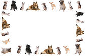 Dog border or frame — Stock Photo