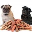 Two cute pugs behind dog treats — Stock Photo