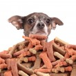 Royalty-Free Stock Photo: Chihuahua and dog biscuits