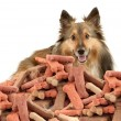 Sheltie and dog biscuits — Stock Photo