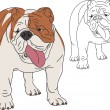 English Bulldog — Stock Vector #8062574
