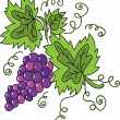 Stock Vector: Grape vector