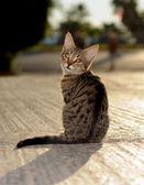 Cat animals — Stock Photo