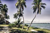 Detail zkratky ostrovů na floridě — Stock fotografie