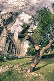 木やモニュメント burggarten、ウィーンで — ストック写真