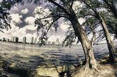 Vegetation of Hobie Island Beach Park in Miami — Stock Photo