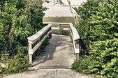 Roślinność i fauny w everglades — Zdjęcie stockowe