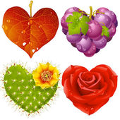 Shape of heart set 3. Fall leaf, grapes, cactus and rose — Stock Vector