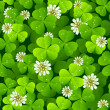 Vector de stock : Clover background