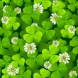 Stock vektor: Clover background