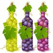 Vine grape bottles — Stock Vector