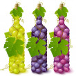 Vine grape bottles - Stock Vector