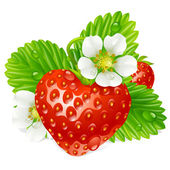 Vector strawberry in the shape of heart and white flowers — Stock Vector