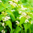 Close-up of the wild white flowers — Stock Photo