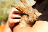 Little rabbit in the hands of man — Stock Photo