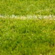 White stripe on the green grass soccer field — Foto Stock