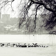 Stock Photo: Winter scene of lake,birds and urbcity