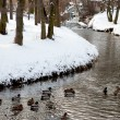 Winter scene of a lake,birds and forest — Foto Stock