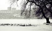 Winter scene of a lake,birds and urban city — Stock Photo