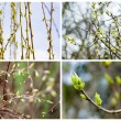 Set of the first spring gentle leaves, buds and branches — Stock Photo