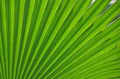 Fresh leaf — Stock Photo