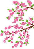 Background with cherry blossom — Stock Vector